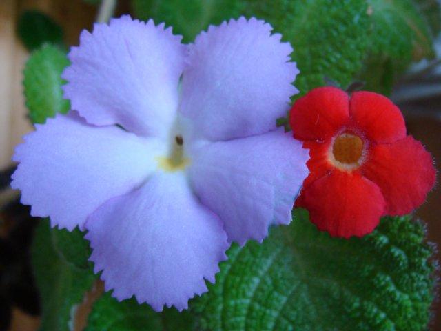 Мои цветочки - Страница 22 991b7913601c