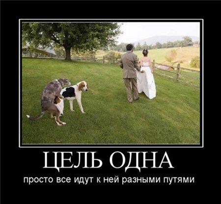 Прикольно - Страница 2 A9a8a4ce294a