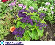 Лето в наших садах - Страница 7 7305ccb56ebbt