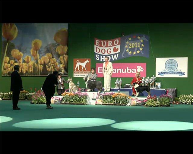 Чемпионат Европы 2011 9cc07ef9e832