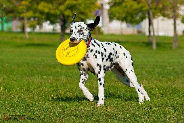 Интернет-зоомагазин Red Dog: только качественные товары для  - Страница 7 94dc598bb9ed