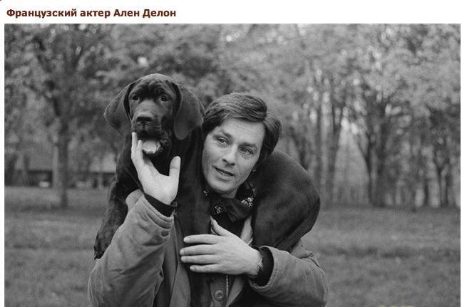 """Доги и """"светское""""общество 37857216b5f5"""