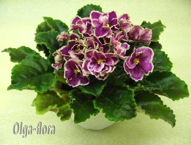 Цветение к Н. Г. (Olga-flora) - Страница 6 Eee86b645603