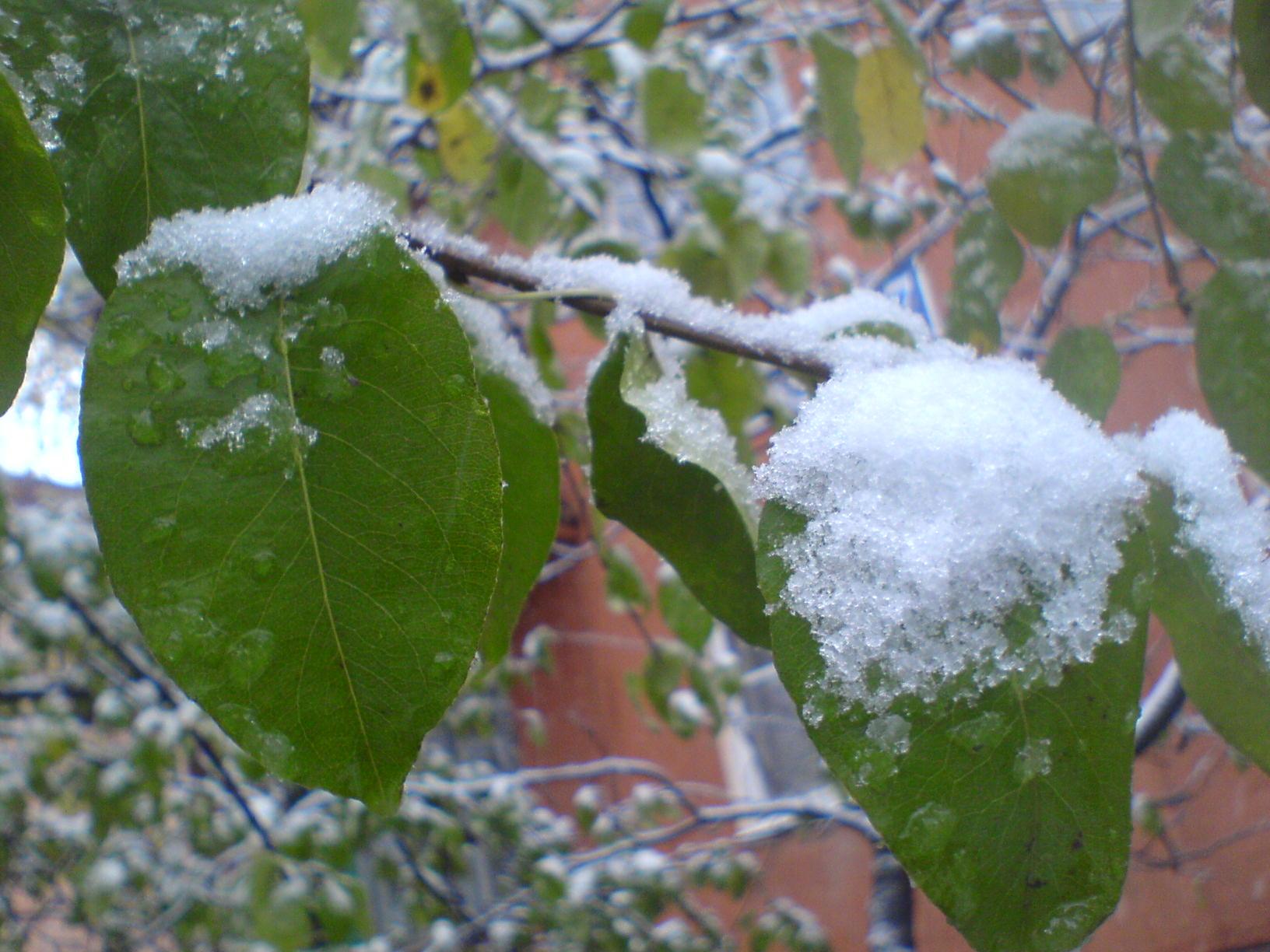 """""""Зимушка, зима...."""" 358df4f8e2a1"""