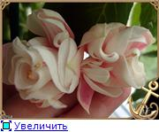 ФУКСИИ В ХАБАРОВСКЕ  - Страница 3 7f0e8568d705t