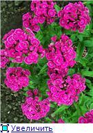 Лето в наших садах - Страница 5 40d49b88b497t