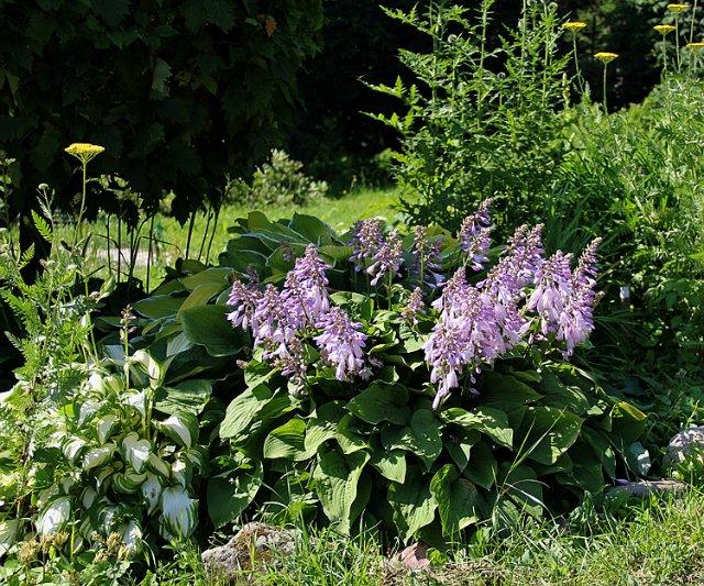 Экскурсия по Ботаническому Саду F60f5eb96883