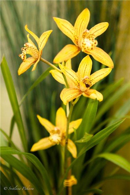 Выставка орхидей в Государственном биологическом музее им. К.А.Тимирязева 25ae298f7e61