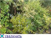 Cад Людмилы Ивановой из черкасс 6fe6e6fb401ct