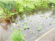 Потоп на Амуре и после - Страница 3 Dbbccbc1fa01t