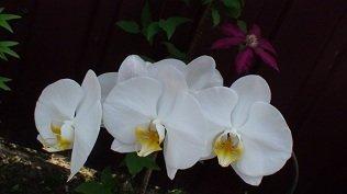 И мои хвастушки-цветушки! - Страница 36 Dcf8b066803b