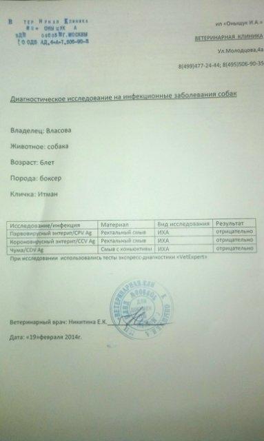 Москва, Итман, кобель 6 лет 2f262e962914
