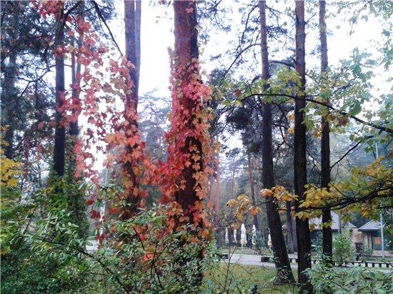 Осень, осень ... как ты хороша...( наше фотонастроение) - Страница 5 39f17a9f2aa2