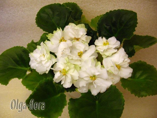 Spring Rose   (LLG) - Страница 2 E6cf8b3e7bd1