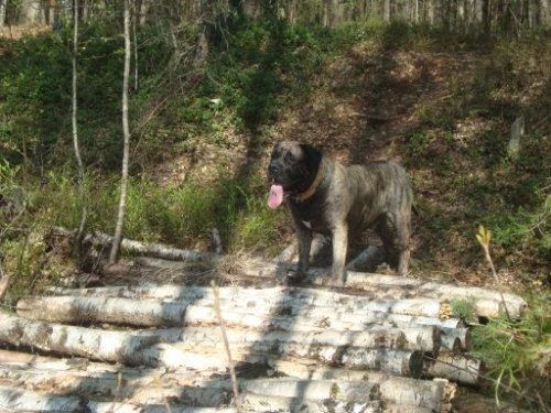 Наши собаки, друзья и гости, кот Мензурка 537c1a9bef40
