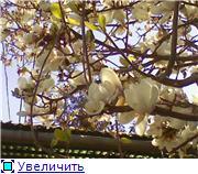 Когда начнется весна? 0761118a6a59t
