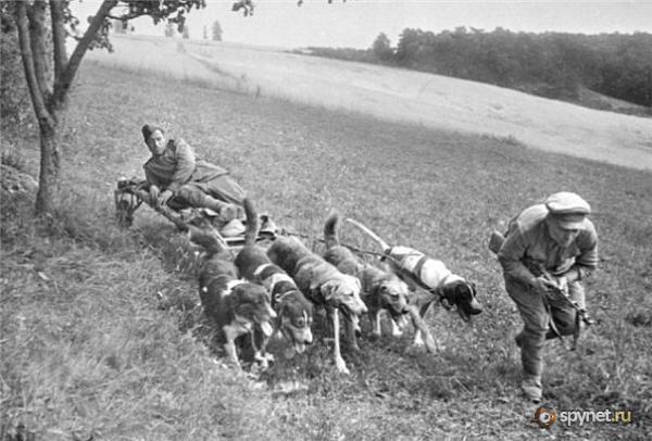 Собаки Великой Отечественной войны 65056b50c46e