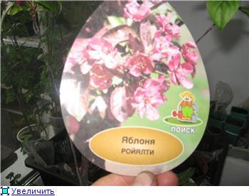 Яблоня: сорта и агротехника. Bba1a0c4680bt