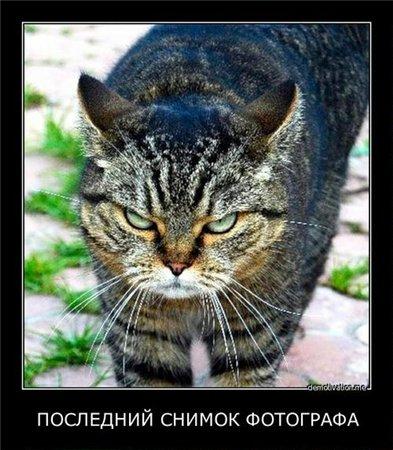 Прикольно - Страница 2 9de67344ef33