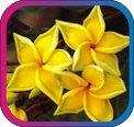 продам семена экзотических растений - Страница 3 Cc31305ffd5b
