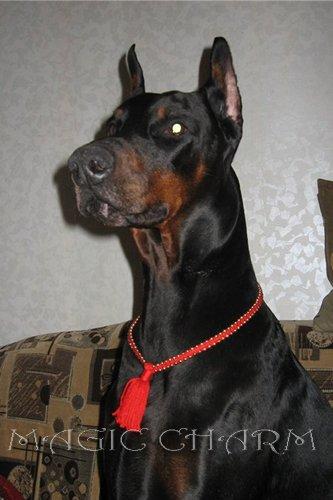 MAGIC CHARM - обереги, ошейники, украшения, ринговки и другие аксессуары для  собак и кошек. 6e681d7d93a0