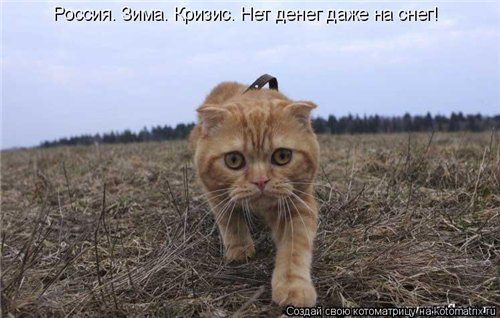 Фотографии кошек 6ea50a511259