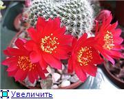 наши домашние цветники B606aade9db5t
