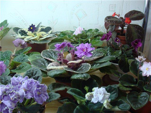 Весеннее  цветение (Хваст от Веры) 68a849f95534