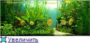 Мои аквариумы. 3c8aa5abc4act