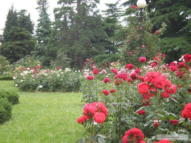 Крым. Никитский ботанический сад. 1c91710d9ba9