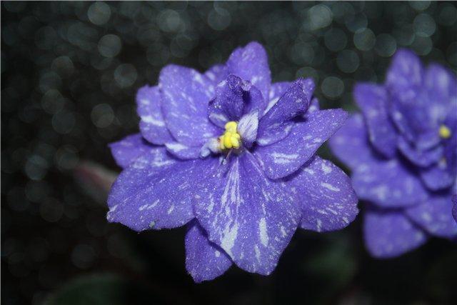 Растения от FILIGERa - Страница 13 52b44640e94e
