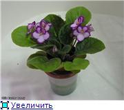 Продам цветущие фиалки в Алматы F4dc1e728d80t