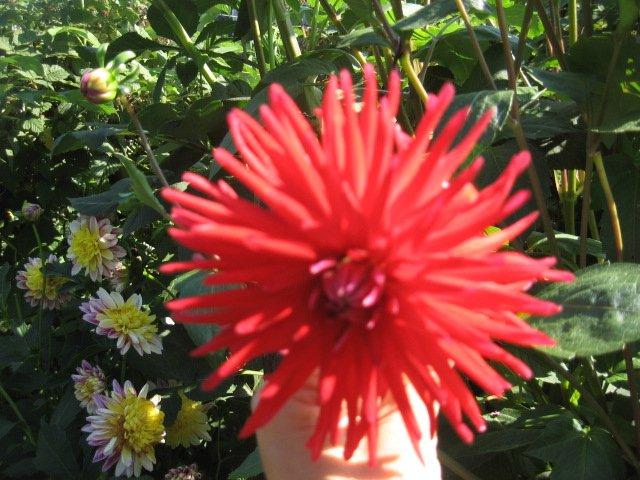 Во саду ли, в огороде... - Страница 6 0af8ee04a7e2
