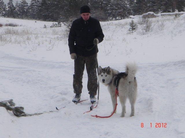 Аляскинские маламуты в Чите Edaed5ef86ff