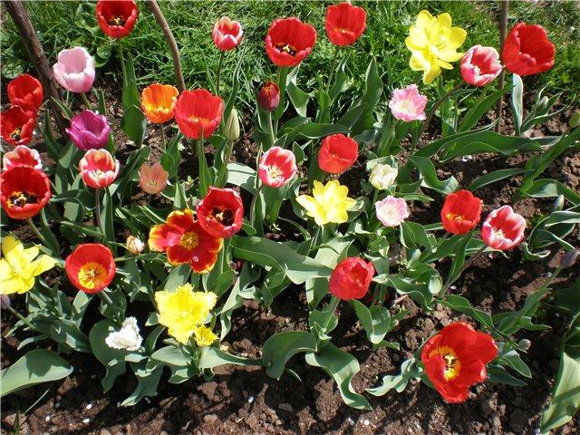 Многолетние растения - Страница 3 78b619a288d3