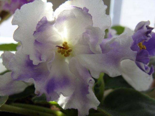 Мои цветочки - Страница 13 0ecff2406f43