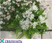 Помогите опознать растение. 76eaa56e5a7et