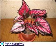 Растения,по приемлемым ценам, в Алматы куплю 1807ee26402dt