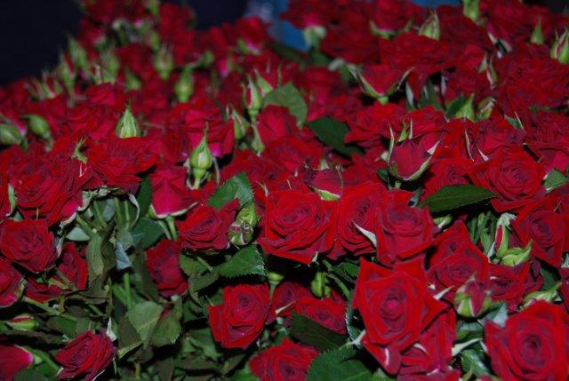 Международая выставка «Цветы.Ландшафт .Усадьба 2010» Астана - Страница 4 F8b261198787