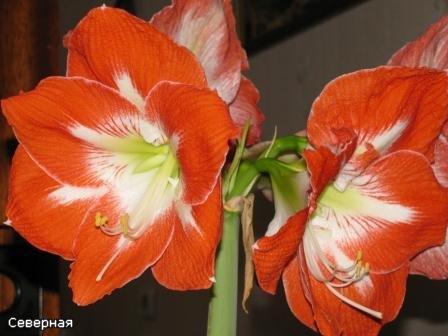 Цветочки Северной A736de349f17
