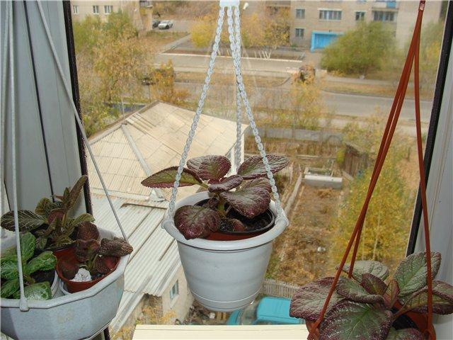 Дополнительное место для растений. F263404babcf