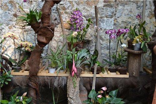 Выставка орхидей Никитского ботанического сада 3fe98e8ab1ab