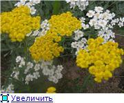 Растения для альпийской горки. Fe843470b03ct