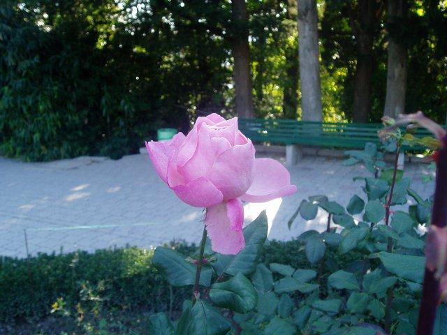 Парад хризантем в Никитском ботаническом саду. Крым  - Страница 2 Db9d9bfc1d63