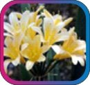 продам семена экзотических растений - Страница 3 210b065232de
