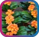 продам семена экзотических растений - Страница 3 De3aca5997b4