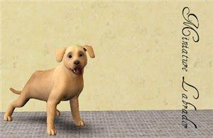 Собаки - Страница 5 1dbbaf56f601