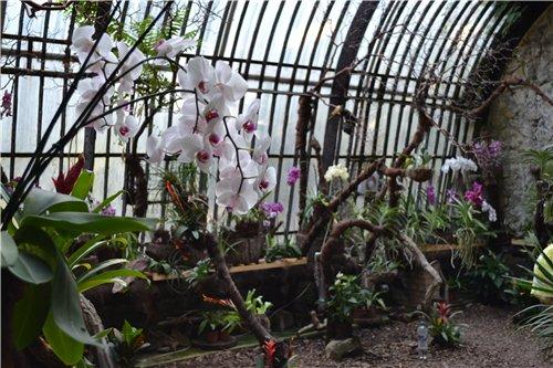 Выставка орхидей Никитского ботанического сада D709af094796
