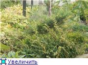 Cад Людмилы Ивановой из черкасс 3be9e391f016t