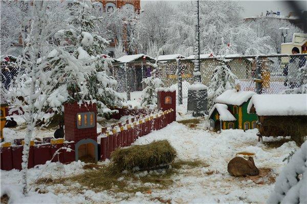 Зимняя сказка на наших фотографиях - Страница 6 6481b56f7b96
